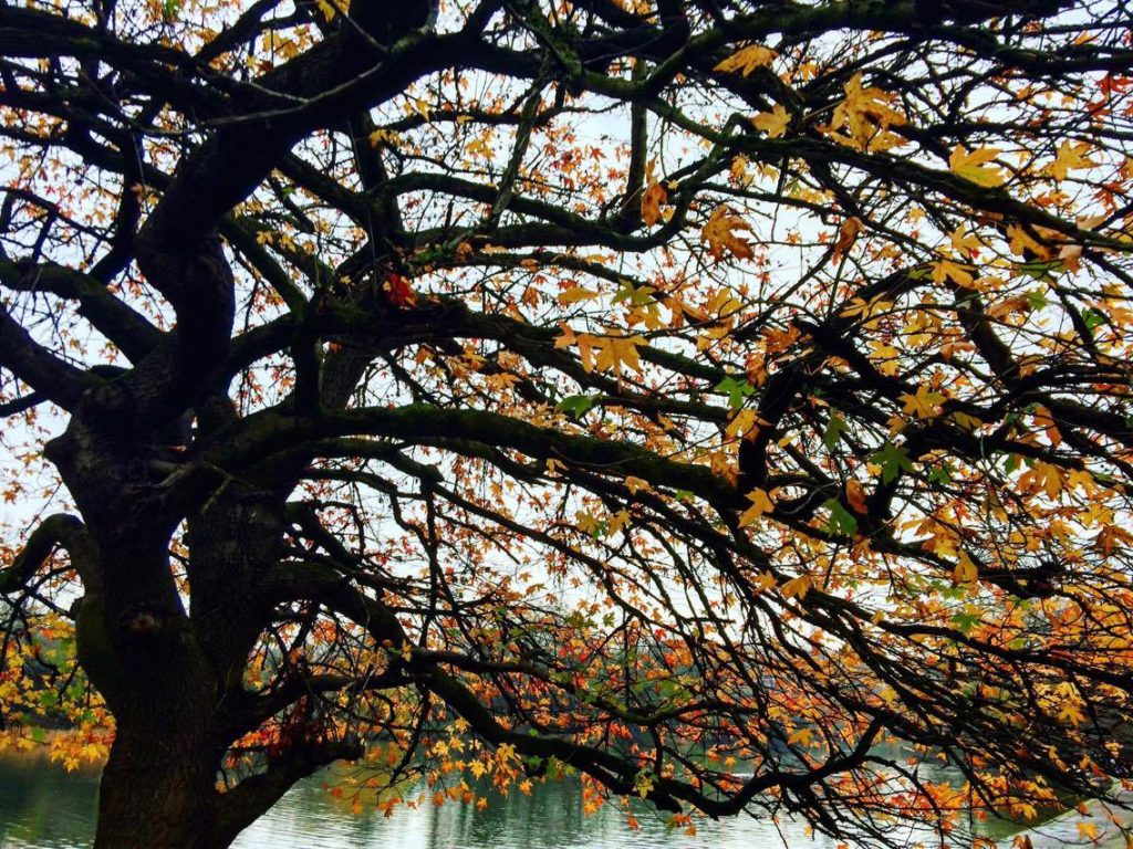 Things to do in Battersea Park Autumn