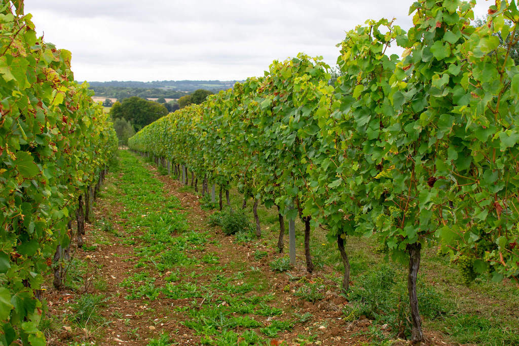 Hattingley Valley Wines - Visiting a British winery from London in a day - British winery