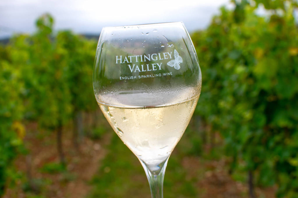 Hattingley Valley Wines - Visiting a British winery from London in a day - a glass of sparkling wine in the vineyard