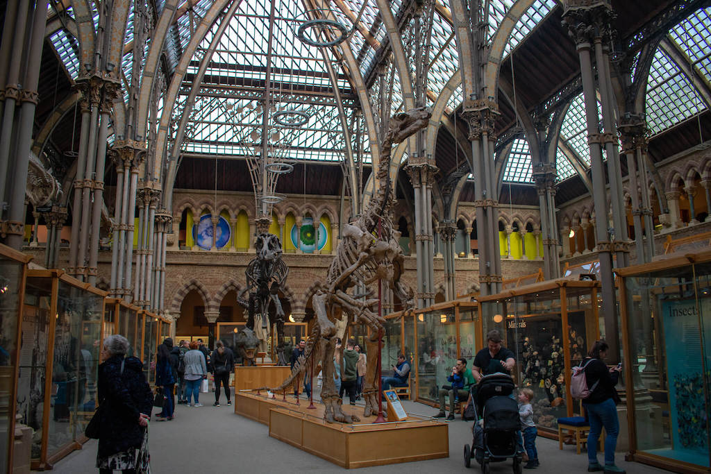 Dinosaur skeletons at Oxfords National History Museum