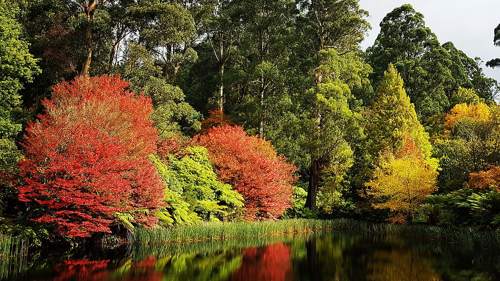 Day Trip from Melbourne to The Dandenong Ranges Botanic Garden