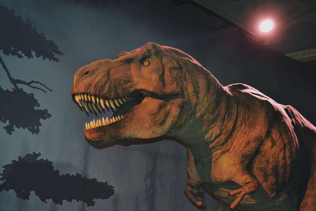 TREX Dinosaur at the Natural History Museum London